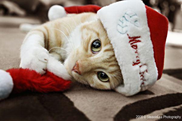 como-hacer-disfraces-de-navidad-para-perros-y-gatos-gato-como-papa-noel