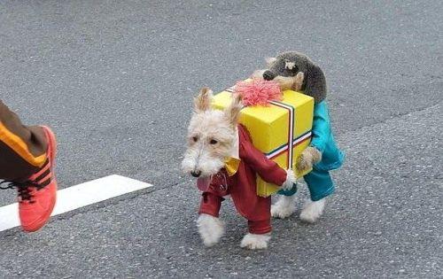 disfraces-de-navidad-graciosos-para-perros-y-gatos-fotos-disfraz-de-perro-regalo