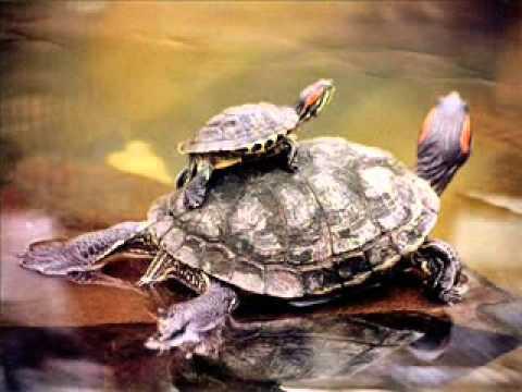 cuidados-de-las-tortugas-portada