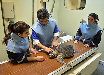 cuidados-de-las-tortugas-veterinario