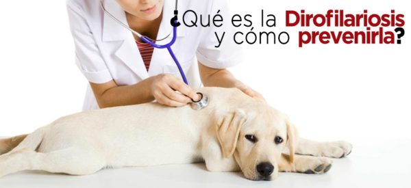 gusanos-del-corazon-parasitos-en-perros-prevencion