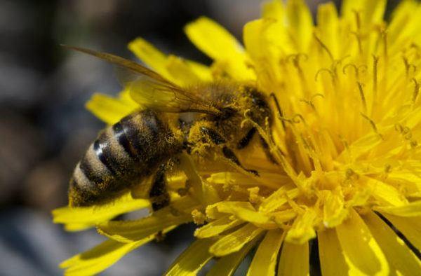 Abejas produccion miel