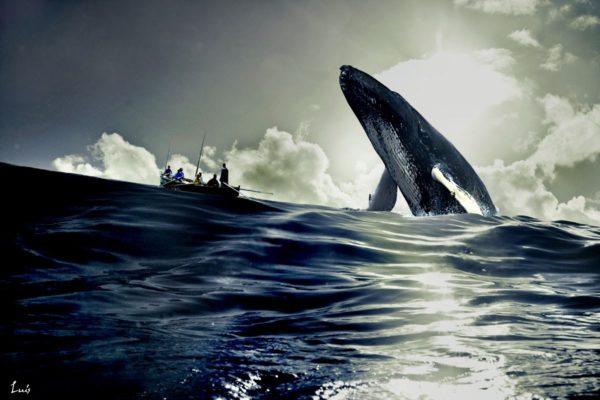 ballena-azul-caza