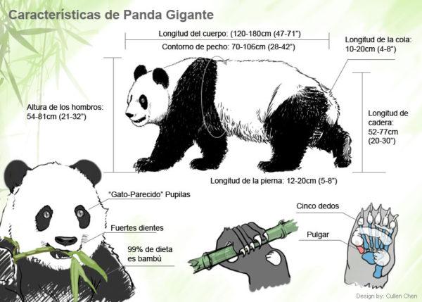 panda-gigante-caracteristicas