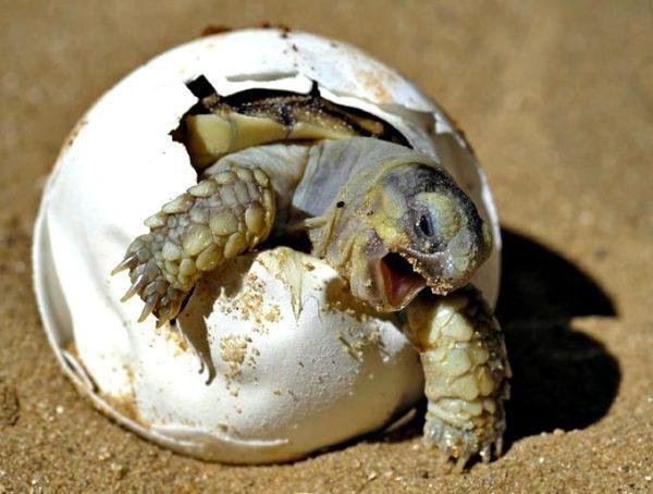 cuidados-de-las-tortugas-cuidado-de-las-tortugas
