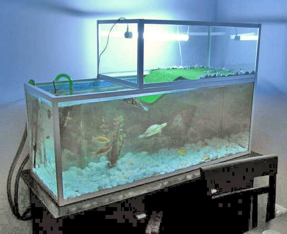 cuidados-de-las-tortugas-limpiar-el-agua