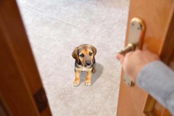 Ordenes perro espera