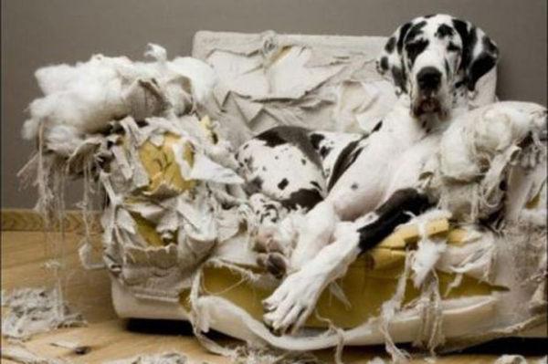 cual-es-el-mejor-juguete-para-mi-perro-juego-destrozo