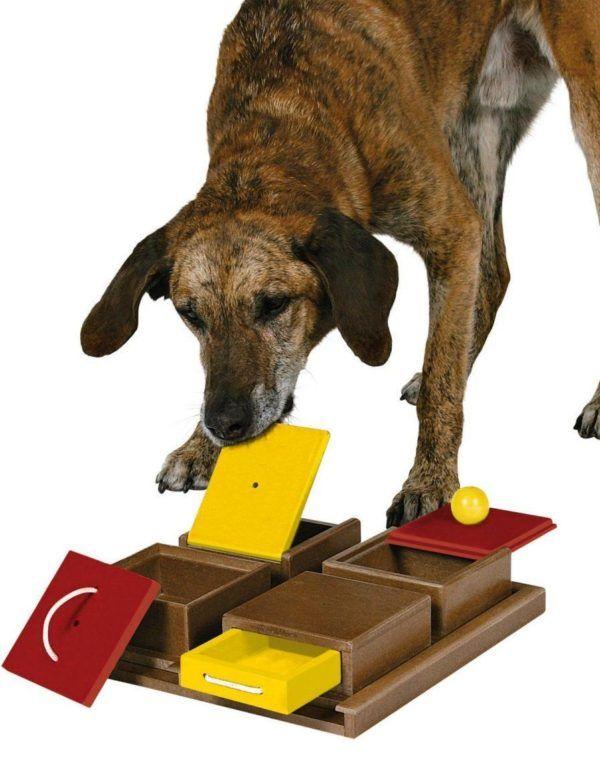 cual-es-el-mejor-juguete-para-mi-perro-juego-inteligencia
