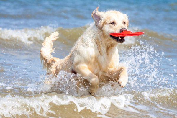cual-es-el-mejor-juguete-para-mi-perro-juego-perro-mar