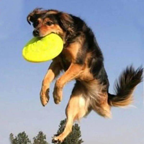 cual-es-el-mejor-juguete-para-mi-perro-juego-salto