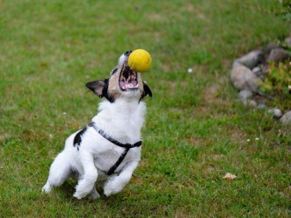 cual-es-el-mejor-juguete-para-mi-perro-juego-vinculo