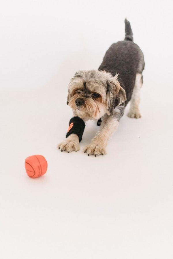 ¿Cuál es el mejor juguete para mi perro? Pelotas