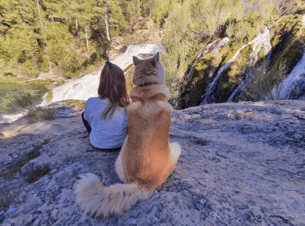 Las piscinas de España en dónde se pueden bañar con perros Taravilla