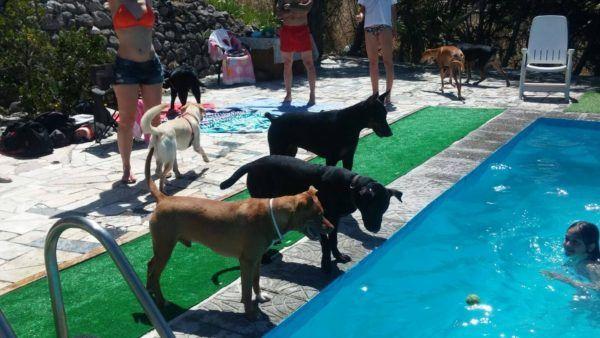 Las piscinas de España en dónde se pueden bañar con perros Peludos al Agua