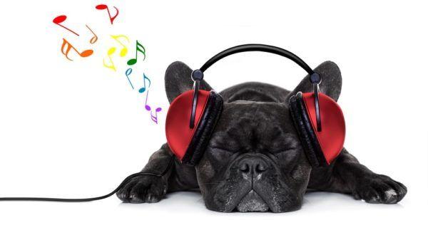 Musica relajante para perros bulldog frances cascos
