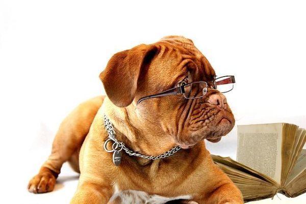 nombres-mitologicos-perro-con-gafas