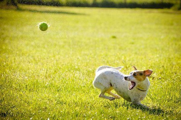 nombres-mitologicos-perro-jugando-con-pelota