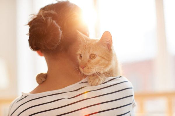 Beneficios de tener un gato amigo fiel