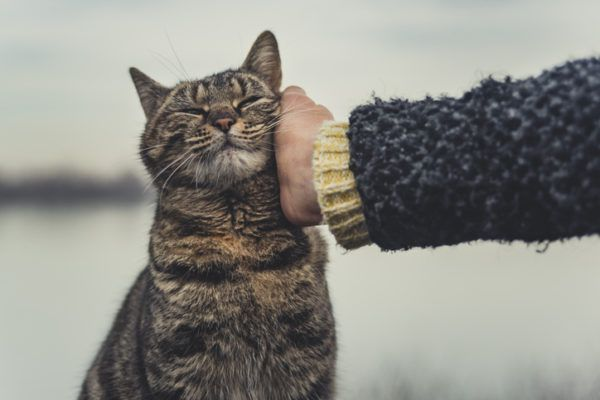 Beneficios de tener un gato amistad