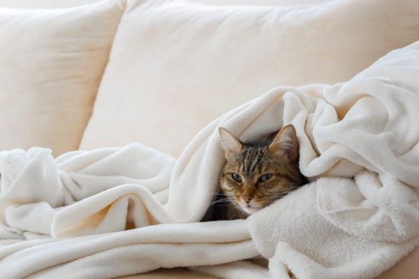 Beneficios de tener un gato cama