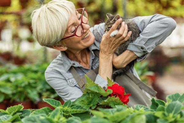 Beneficios de tener un gato mayores