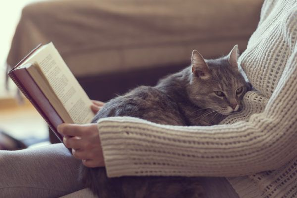 Beneficios de tener un gato salud