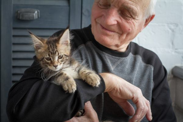 Beneficios de tener un gato soledad