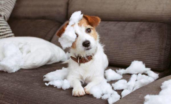 Como educar un cachorro