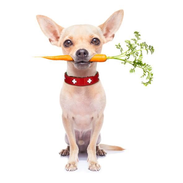 Dieta barf para perros beneficios