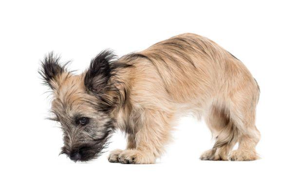 Filariosis canina prevencion