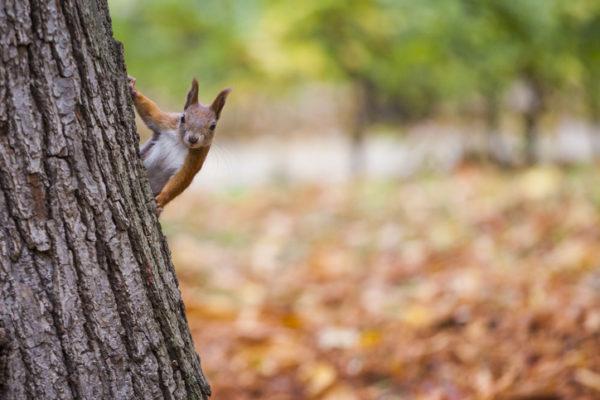 Animales omnivoros ardilla