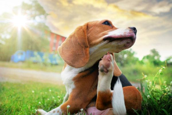 Alergia canina sintomas