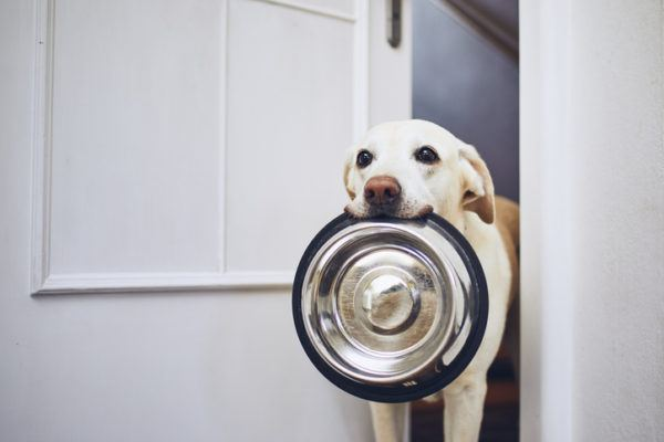 Infecciones urinarias en los perros causas sntomas y tratamientos comida