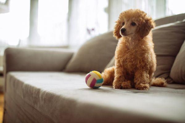 mejores-juegos-para-cachorros5