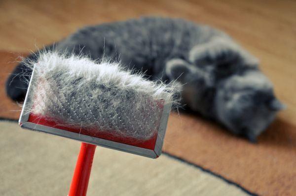 como-tratar-la-alergia-a-los-gatos-istock5