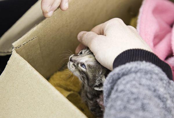 Ventajas de adopción de animal