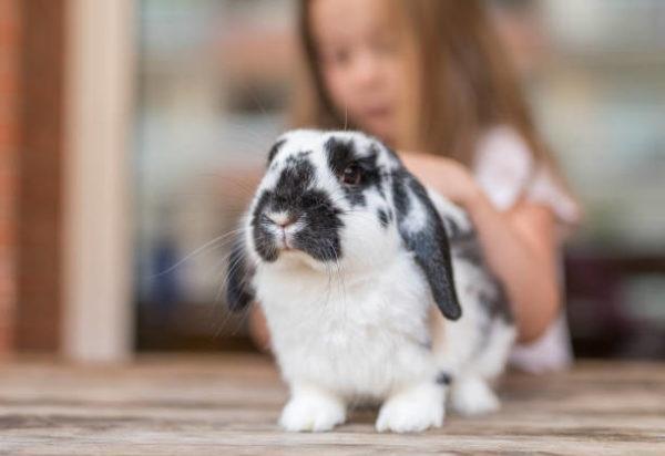 Como hay que cuidar a conejo
