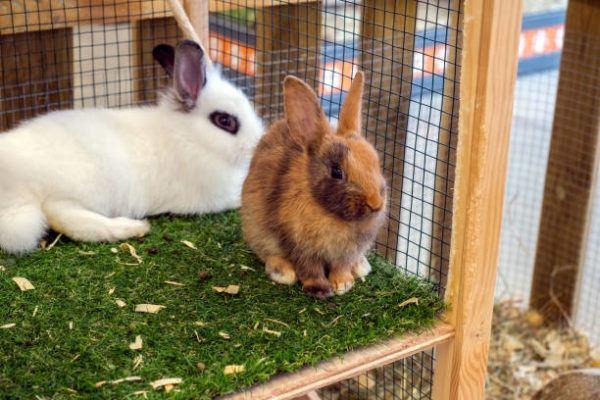 Como hay que cuidar a un conejo