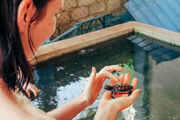 Cuales son los cuidados que necesitan reptiles