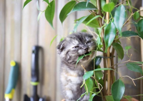 Hierbas venenosas para gatos