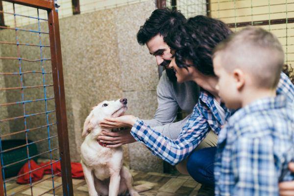 Ventajas de adoptar un animal
