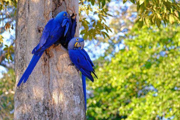 Animales que se extinguieron el ano pasado guacamayo azul