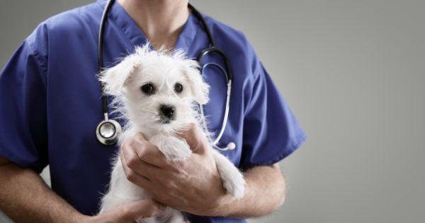 Adoptar un perro claves requisitos consejos a tener en cuenta adoptado