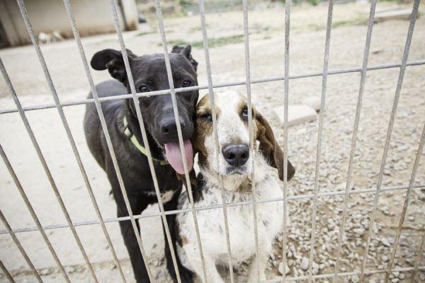 Adoptar un perro claves requisitos consejos a tener en cuenta jaula