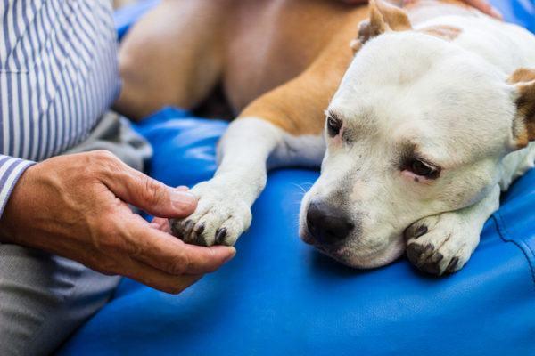 Adoptar un perro claves requisitos consejos a tener en cuenta requisitos