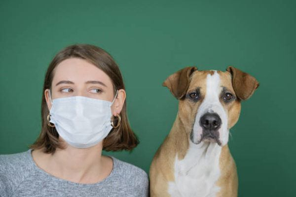 Por qué perros y gatos no pueden contagiar el coronavirus