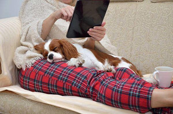 Como afecta la cuarentena a las mascotas