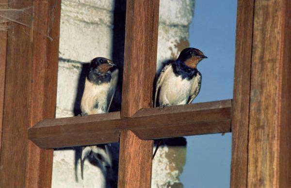 Aves migratorias que son donde migran