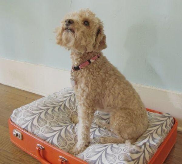 como-celebrar-dia-del-perro-maleta-cama-la-nubes-de-algodon